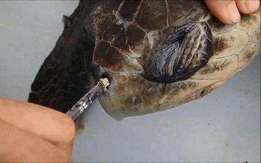 sea-turtle-large_trans_NvBQzQNjv4BqpJliwavx4coWFCaEkEsb3kvxIt-lGGWCWqwLa_RXJU8